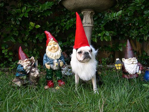 Just chillin' with my gnomies.