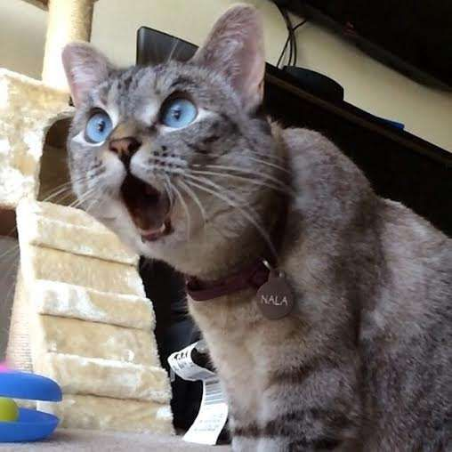 It's pretty hard to shock a cat..... but sometimes they see something they just can't believe!