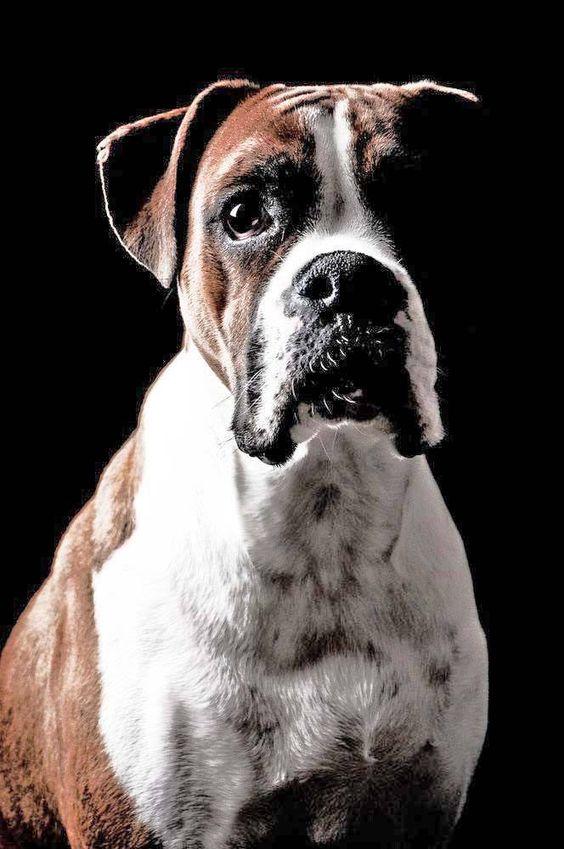 Beautiful, Popular and Fun dog on Pinterest