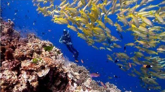 Uma Coleção de Surpreendentes Vídeos Subaquáticos