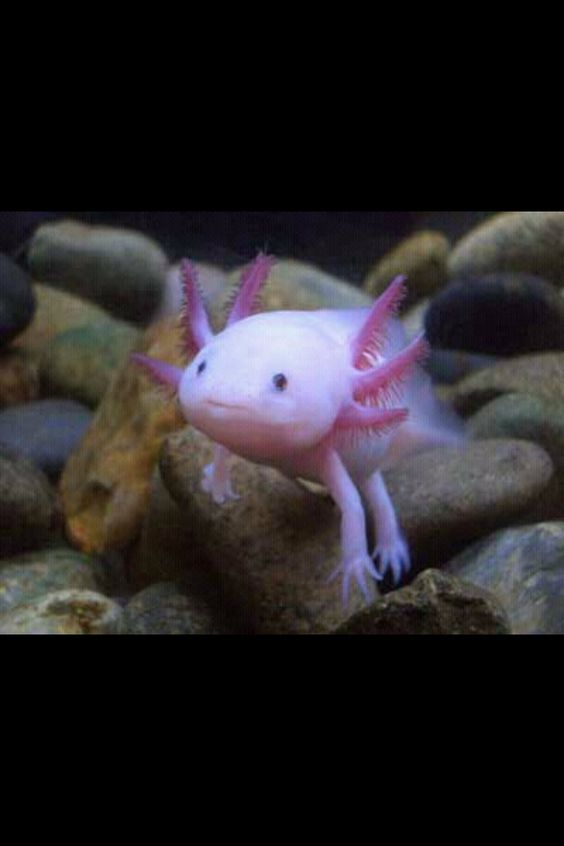 Pinterest the world s catalog of ideas for The walking fish