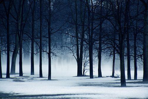 Snowy Woods Tumblr