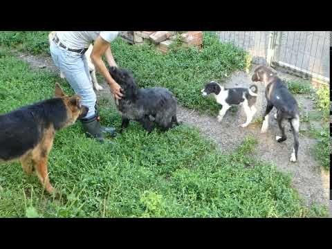 Maxi In Rumanien In Der Obhut Von Ador Youtube Tiere Tierschutz Rumanien