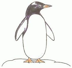 penguin drawing - Google Search