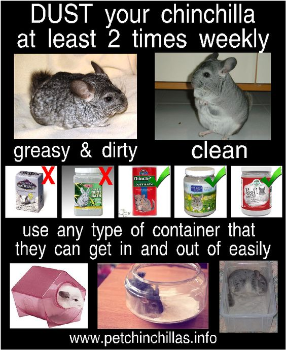 The proper way to dust your chinchilla. Education and awareness reduce re-homing!