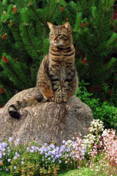 awww!  This looks like my Havoc-kitty! :)