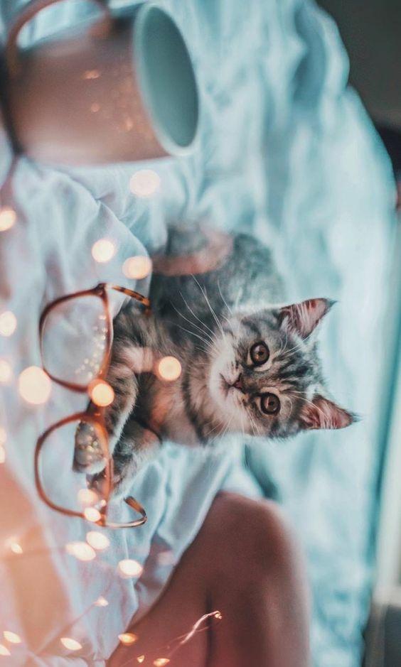 Mi Amor Cat Photography Cats Animal Photography