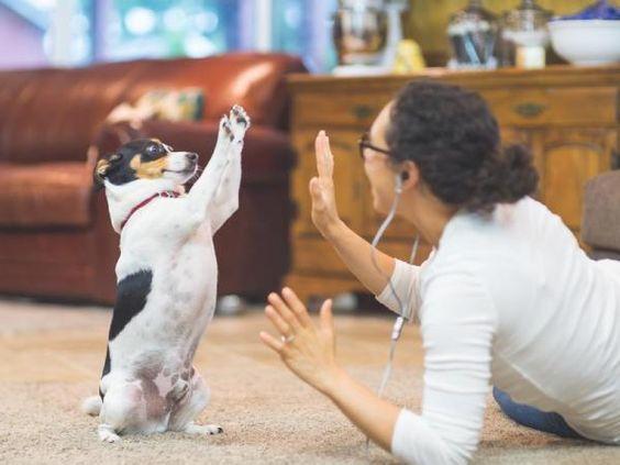 Juegos De Inteligencia Para Perros En Casa Perros El Encantador De Perros Razas De Perros