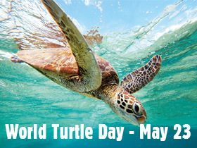 How will you celebrate World Turtle Day? May 23: