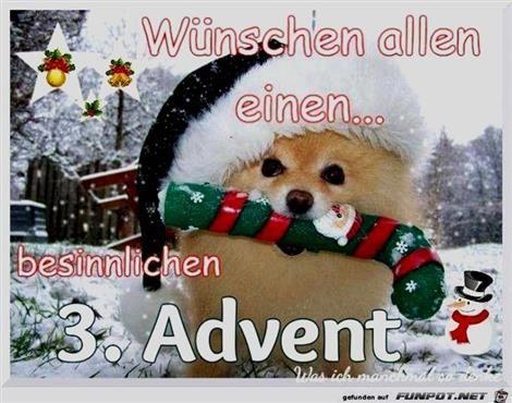 3 Advent Lustige Bilder Mit Bildern Advent Lustig Weihnachten Tiere Weihnachtshund