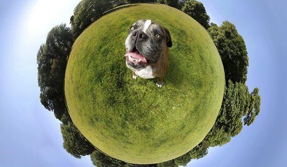 4 simple steps to be a more eco-friendly pet parent