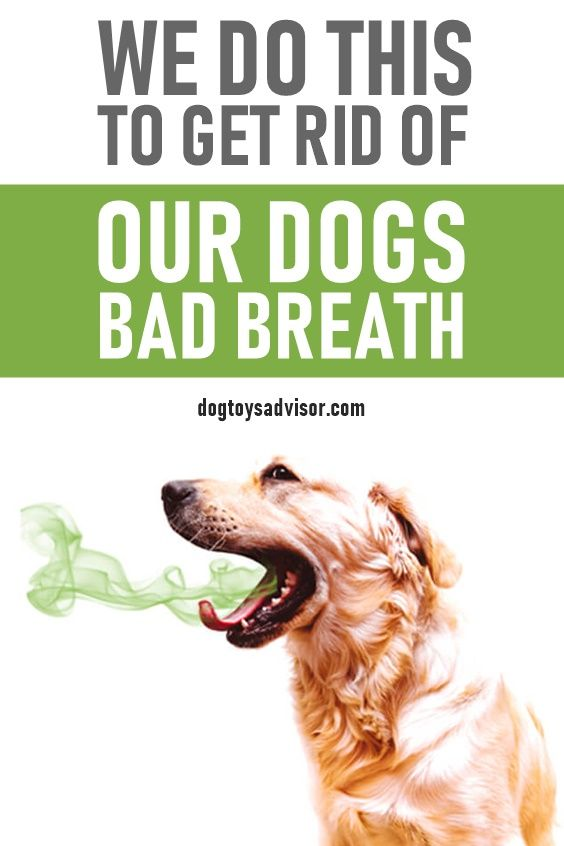 How To Get Rid Of A Dog S Bad Breath In 2020 Bad Dog Breath Dog Breath Dog Breath Remedy
