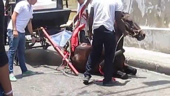 Video Abuso a caballos cocheros en la Cartagena de Colombia turistica, abril 2014 (P...