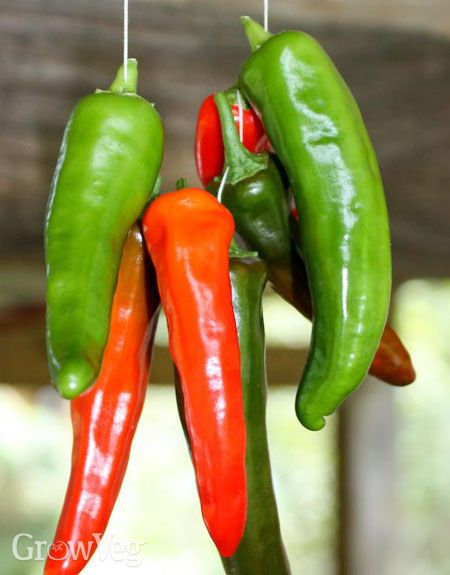 Drying peppers | Preserving | Pinterest