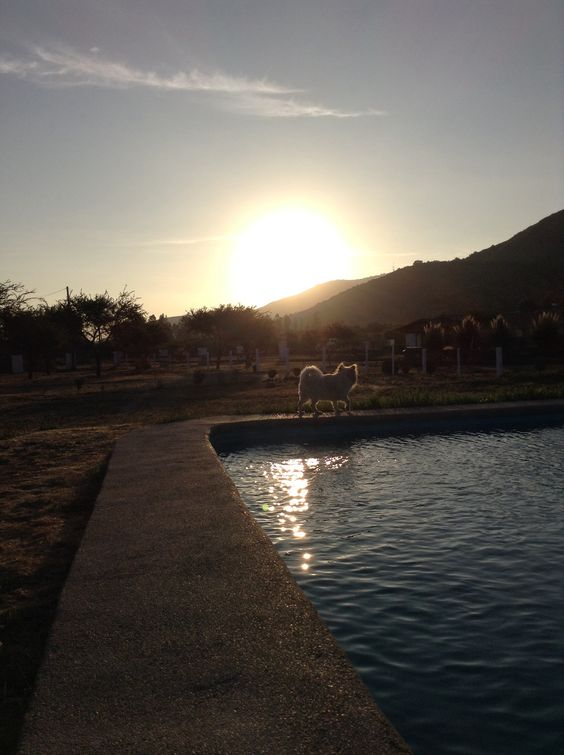 Sunset and dog. Lo Ovalle. Casablanca. Chile