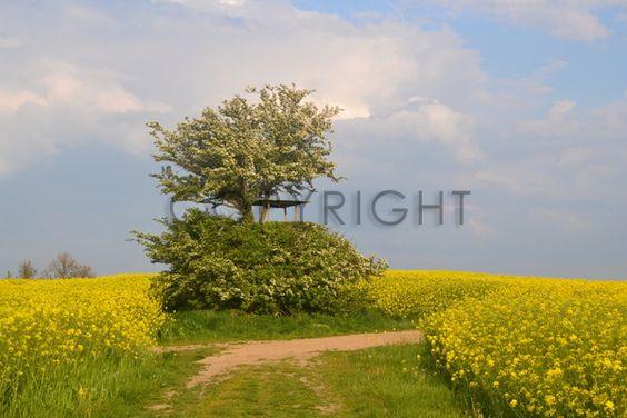 http://www.fineartprint.de/?page=bilder_mod/bild_image_preview.php&typ=community&image=11444084