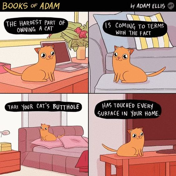 13 Things All Cat Owners Know To Be True http://ibeebz.com