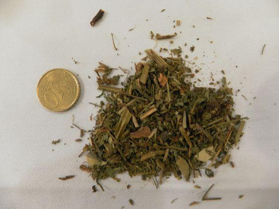 Géranium Herbe à Robert, Géranium robertianum, GERANIACEES
