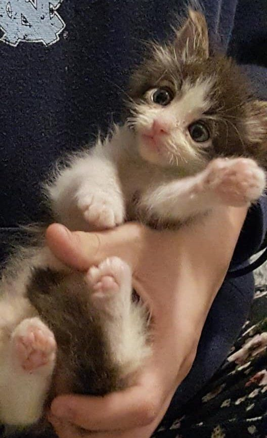 Woman Fought To Save Small Kitten From The Brink He S Still Tiny But Mighty Kittens Cutest Kittens Cutest Baby Baby Animals Funny