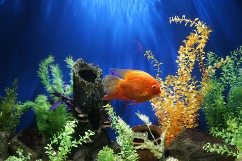 Aquarium Products Fish Aquarium Decorations Aquarium Decorations Aquarium