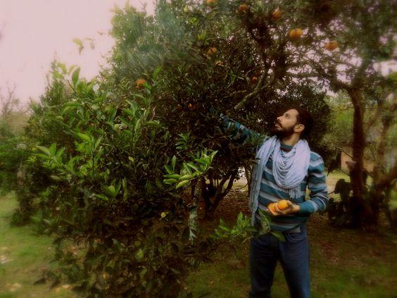 colheita das frutas de inverno