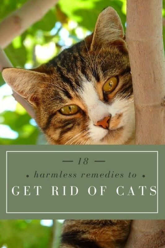 How To Get Rid Of Stray Cats Cats Cat Repellant Outdoor Cats