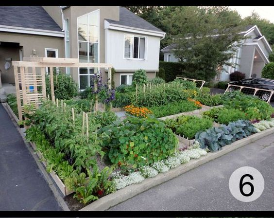 Gardens vegetables and vegetable garden on pinterest for Front yard garden