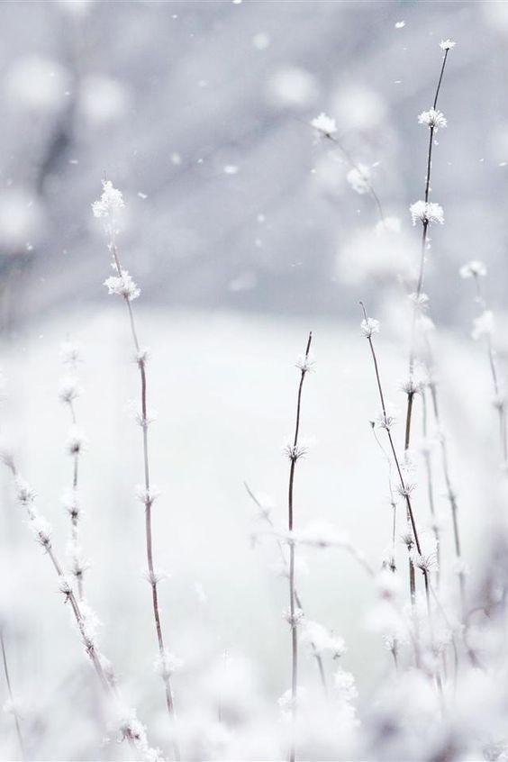 Jardin sous la neige:
