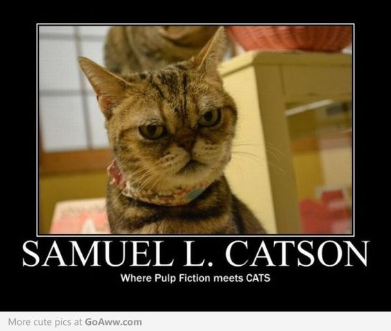 It's actually gross how much this cat looks like Samuel L. Jackson!