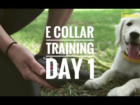 Remote Collar Recall 101 Solid K9 Training Youtube E Collar