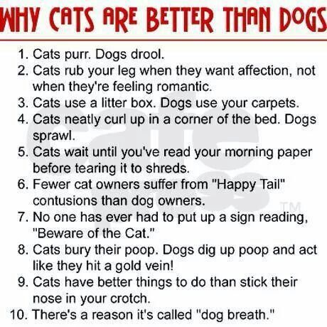 Dogs Are Better Than Cats Speech