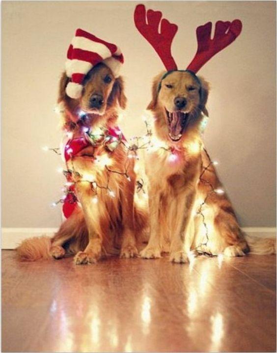 Dogs with Christmas Lights, Fun and Creative Christmas Card Photo Ideas, http://hative.com/fun-creative-christmas-card-photo-ideas/,
