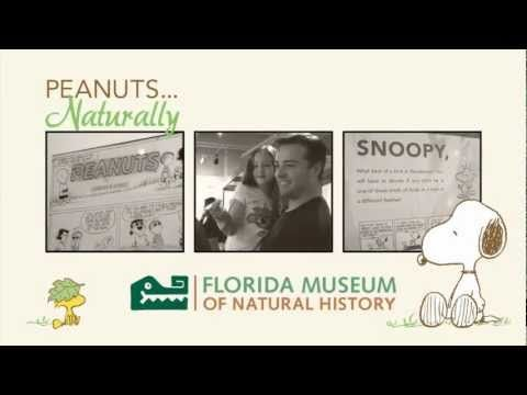 Charlie Brown, Snoopy and friends explore nature in new exhibit at the Florida Museum of Natural HIstory.
