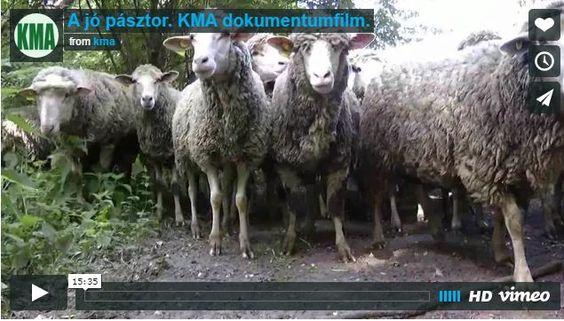 Milyen a jó pásztor