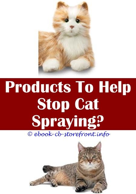 8 Productive Tips And Tricks Do Female Cats Spray After Being
