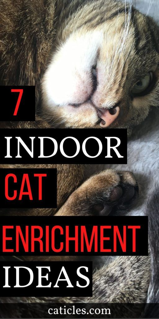 How To Keep A Cat Entertained In An Apartment Pro Tips Cats Cat Care Cat Care Tips