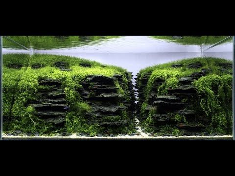 Wonderful Hungarian Aquascaping Contest 2014 Results.   YouTube | ♥ Aquascapes |  Pinterest | Aquariums