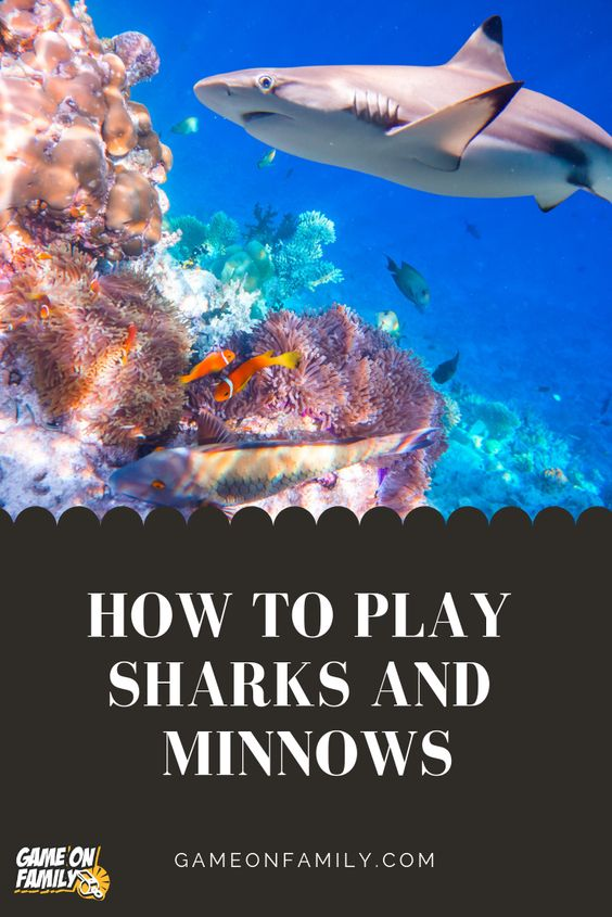 Do you know the rules of the classic #playground game called Sharks and Minnows?  There are a few versions of this game but the #tutorial below is our favorite.  A wonderfully active game that entails lots of exercise, Sharks and Minnows will get your #kids and #family running or swimming faster than you thought possible. I also like how this game develops kids' hand eye coordination and quick thinking. strategic skills. #games #gameonfamily #sharksandminnows
