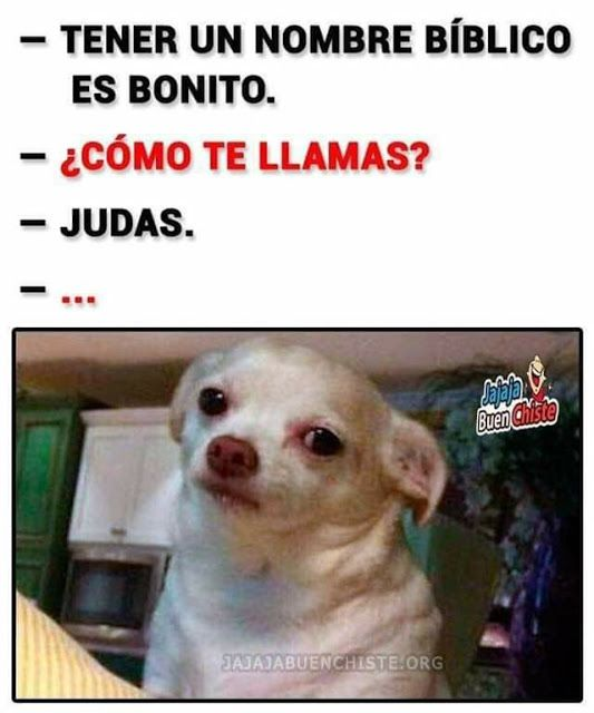 Judas Memes De Perros Graciosos Memes Divertidos Memes Graciosos