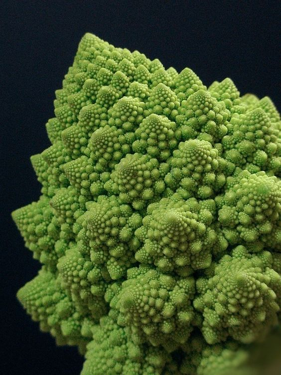 the head of Romanesco broccoli is a striking example of an approximate fractal in nature
