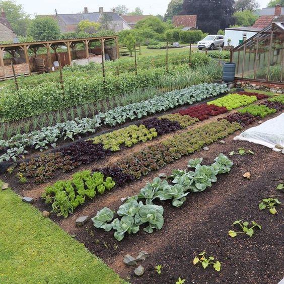 Aj Uzitkova Zahradka Moze Vyzerat Uzasne A Elegantne 50 Inspiracii A Vychytavok Sikovnik In 2020 Vegetable Garden Raised Beds Vegetable Garden Design Garden Layout