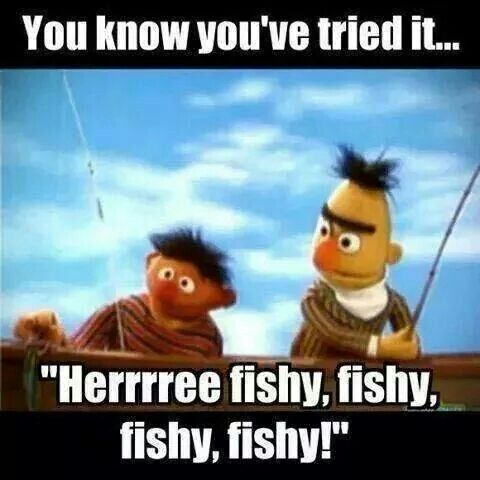 Bert ernie sesame street meme here fishy fishy re for Dirty fishing jokes