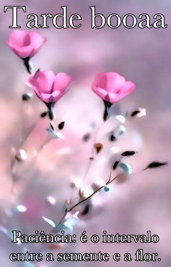 Paciência: é o intervalo entre a semente e a flor. então tenha…