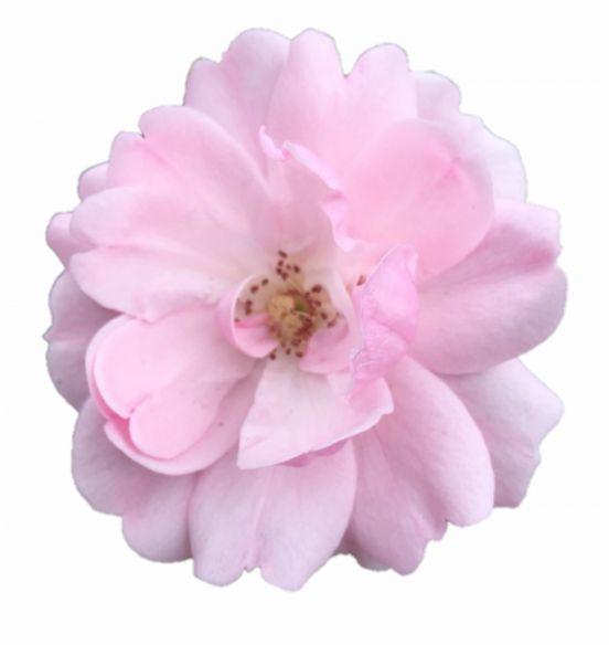 17 Flower Png Aesthetic Abstract Logo Tumblr Flower Flower Aesthetic