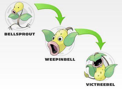 bellsprout evolution - Google Search   Pokémon   Pinterest ...