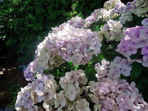 Taken at Hearst Castle Gardens