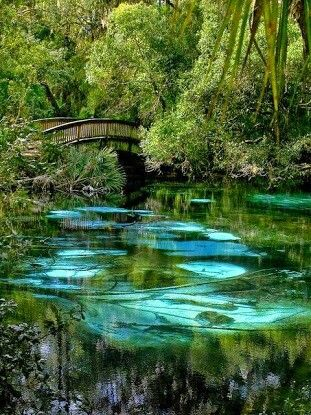 Fern Hammock Springs Florida USA