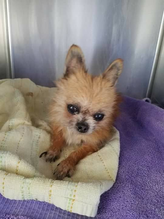 Update On Thumper Tiny Dog Found In Pizza Box In Trash Tiny Dogs Dog Throw Nyc Dogs