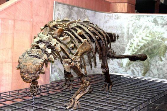 Ankylosaurus Senckenberg   Dinosauria 1 : Ankylosaurus ...