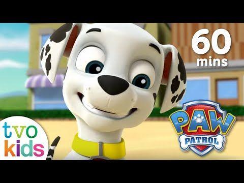 Paw Patrol Season 3 Full Episodes 60 Minute Compilation Youtube Paw Patrol Color Studies Paw